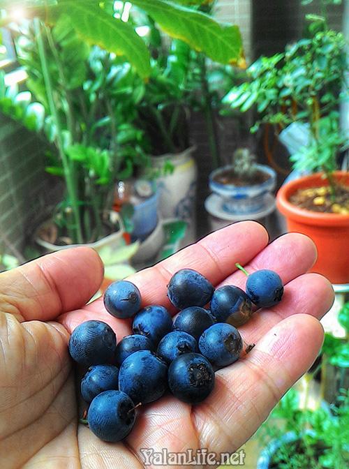 Taipei life Blueberry Romanticism 台北生活 艺术 蓝莓  浪漫主义 Yalan雅岚 黑摄会